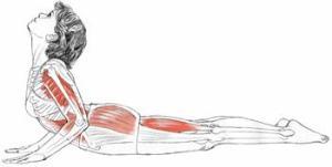 cobra muscles