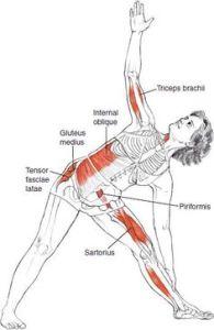 triangle anatomy