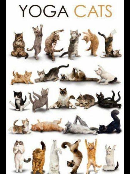 yoga-cats